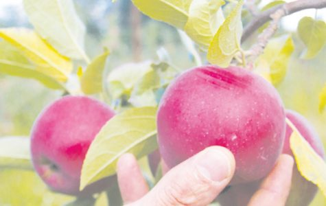 Monsanto invests in apple study
