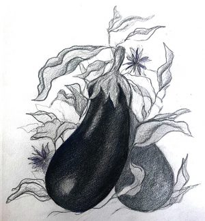 Illistrations: Egg Plant