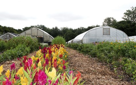 Intervale offers fresh produce and strong community