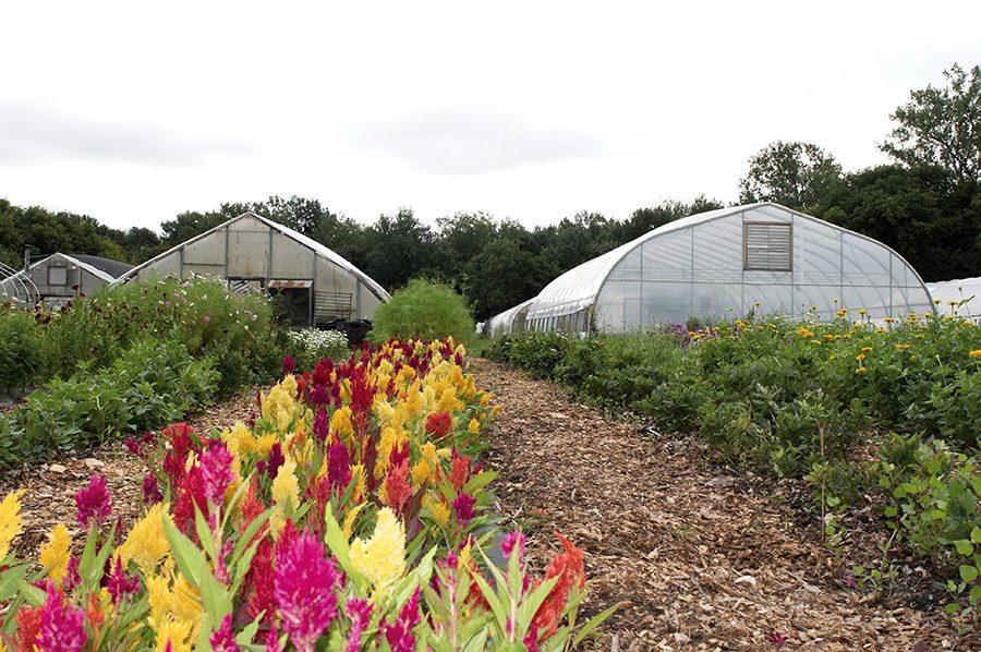 The Intervale Community Farm, a 58-acre farm in Burlington that includes seven sections of the Winooski River, allows members to purchase small, medium or large shares, which gives them access to fresh produce every week.