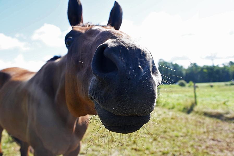 HORSEY+BOY+1+%28MADDY+DEGELSMITH%29%28WEB%29