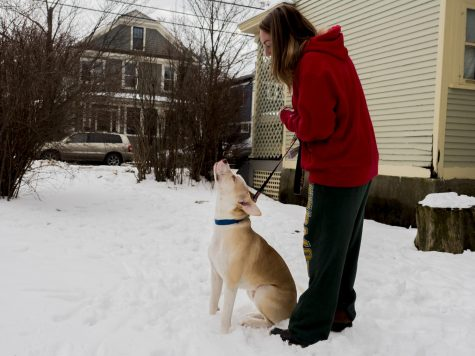 One-year-old Andrew looks up at his caretaker, junior Taylor Peltierr, Jan. 25. Winnie's Legacy Canine Rescue advertises available dogs on their Facebook page.
