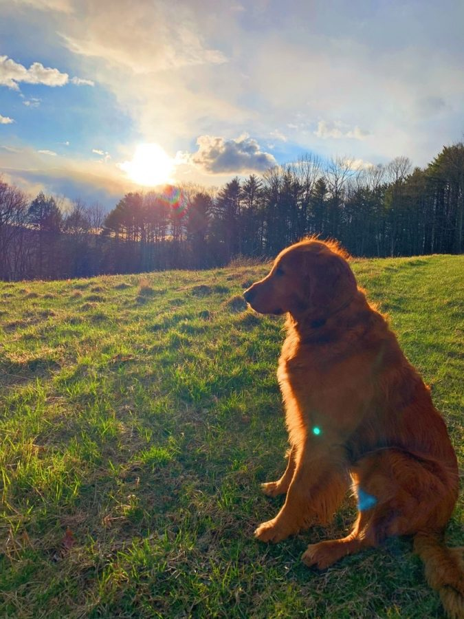 First-year Eliza Mabey submitted this photo from a walk in a meadow with her dog Junior in central Vermont  after a long day of doing homework.
