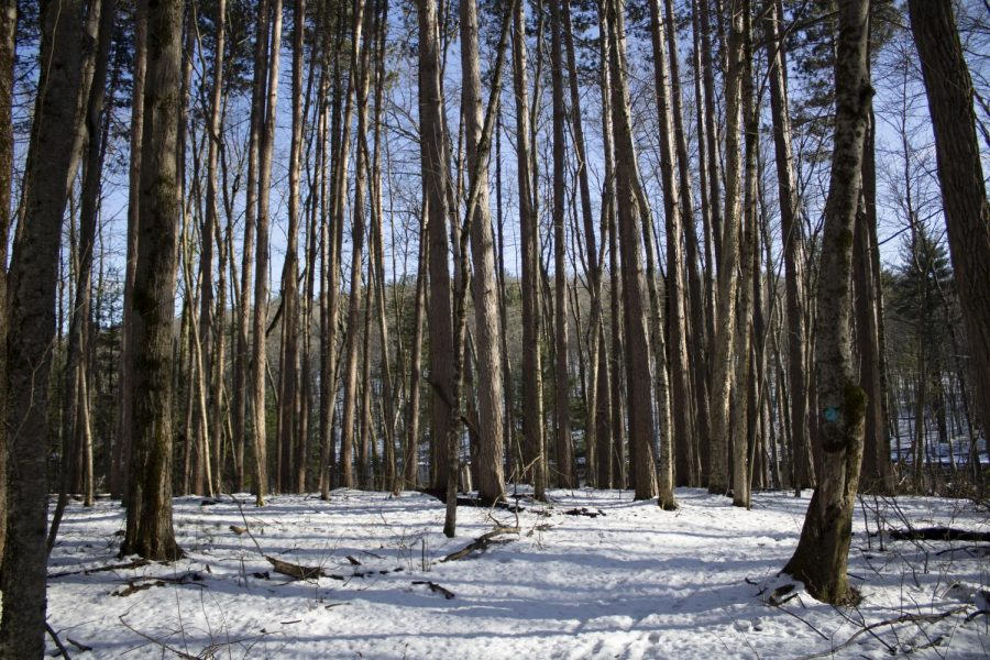 On March 24, there was still snow on the ground near Cobbler's Brook in Merrimac, MA.