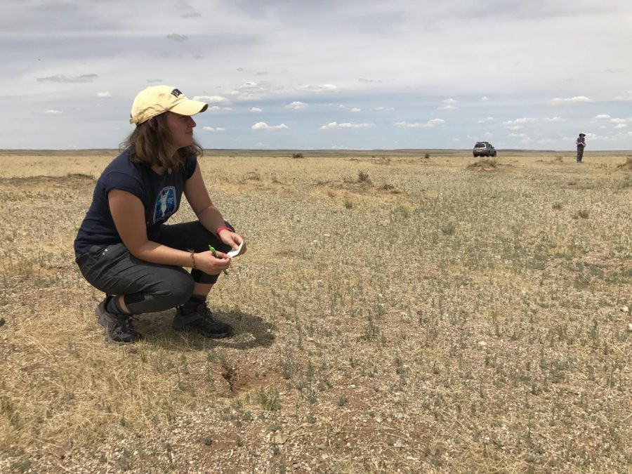 Senior Reilly Becchina won a Fulbright research award to study an endangered marmot species in Mongolia.