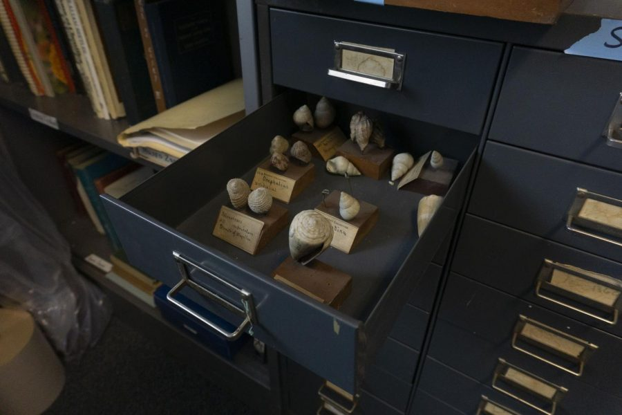 A new perspective of some of UVM's oldest displays